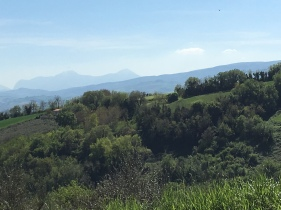 Hills of Le Marche