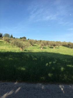 Evening over the Olive Grove