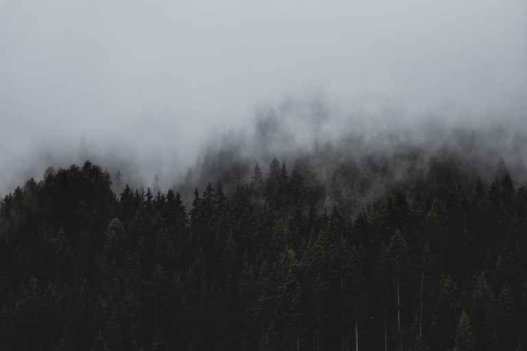 forest under clouds